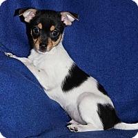 Adopt A Pet :: Nacho - Winters, CA