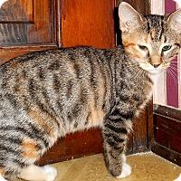 Adopt A Pet :: Queen - Chattanooga, TN