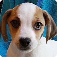 Adopt A Pet :: Yazi - Staunton, VA