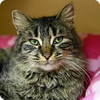 Adopt A Pet :: Twister - Kettering, OH