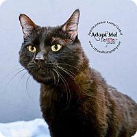 Adopt A Pet :: Jack Jack - Apache Junction, AZ