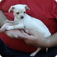 Adopt A Pet :: Chip - Pleasanton, CA