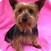 Adopt A Pet :: Lynnie - Alta Loma, CA