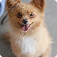 Adopt A Pet :: Bare - Canoga Park, CA