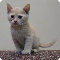 Adopt A Pet :: Belle - Gary, IN
