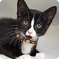 Adopt A Pet :: Wendy - Dublin, CA