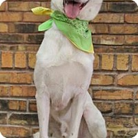 Australian Shepherd Mix Dog for adoption in Benbrook, Texas - Apollo