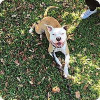 Adopt A Pet :: Otis - West Palm Beach, FL