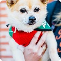 Adopt A Pet :: Kiwi - Los Angeles, CA