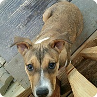 Adopt A Pet :: Lilly - Mesa, AZ