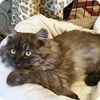 Adopt A Pet :: Marci - Phoenix, AZ