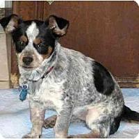 Adopt A Pet :: Jon Pauly - Conroe, TX