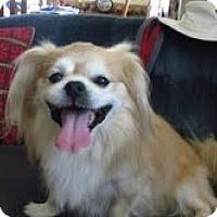 Adopt A Pet :: Jax - Chantilly, VA