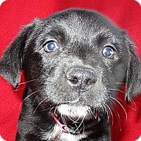 Adopt A Pet :: Sweetie - Hadley, MI