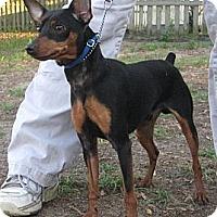 Adopt A Pet :: Spike - Orange Park, FL