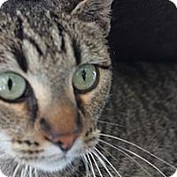 Adopt A Pet :: Josephine - Santa Monica, CA