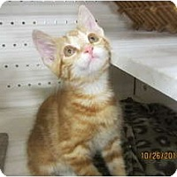 Adopt A Pet :: Topaz - Sterling Hgts, MI