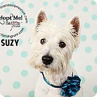Adopt A Pet :: Suzy - Omaha, NE