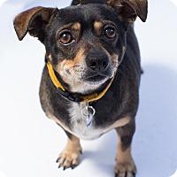 Adopt A Pet :: Trigger - Santa Barbara, CA