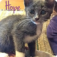 Adopt A Pet :: Hope - McDonough, GA