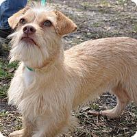 Adopt A Pet :: Bernie - Gainesville, FL