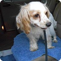 Adopt A Pet :: Lucky  -Adopted! - Kannapolis, NC