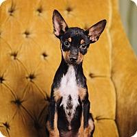 Adopt A Pet :: D.J - Portland, OR