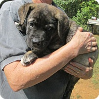 Adopt A Pet :: Sasha - Brookside, NJ
