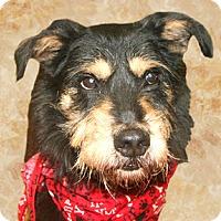 Adopt A Pet :: Mutt - Cincinnati, OH