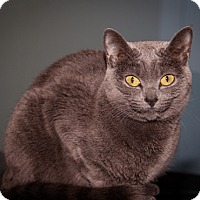 Adopt A Pet :: Cindy - Martinsville, IN