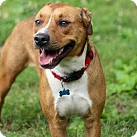 Adopt A Pet :: BRANDY - Franklin, TN