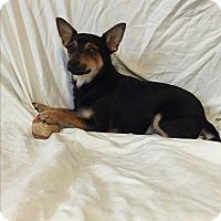 Adopt A Pet :: Shadow - Hampton, VA
