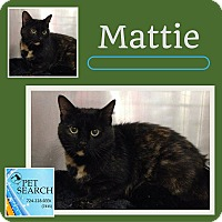 Adopt A Pet :: Mattie - Washington, PA