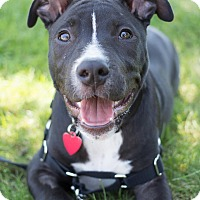 Adopt A Pet :: Vinny - Grand Rapids, MI