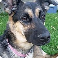 Adopt A Pet :: ARYA - Winnipeg, MB