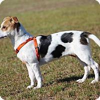 Adopt A Pet :: Farah-Adoption Pending - Pinehurst, NC