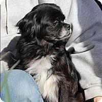 Adopt A Pet :: Tibbie - Charlottesville, VA