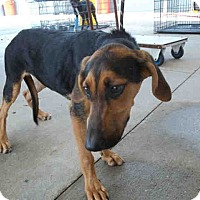 Adopt A Pet :: Corley - Newnan City, GA