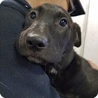 Adopt A Pet :: Olivia - Red Bluff, CA