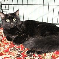 Adopt A Pet :: Duncan - Warwick, RI