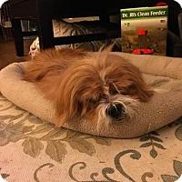 Adopt A Pet :: Stuart - Austin, TX