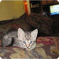 Adopt A Pet :: Lacie - Modesto, CA