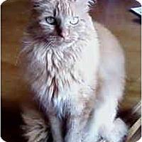 Adopt A Pet :: Bella - St. Louis, MO