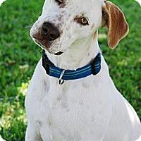 Adopt A Pet :: Bess - Torrance, CA
