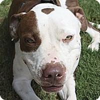 Adopt A Pet :: Snickers - Phoenix, AZ