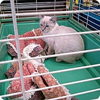 Adopt A Pet :: Candy-Man - Walnut, IA