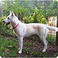 Adopt A Pet :: Hallie - Conyers, GA