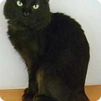 Adopt A Pet :: Binx - Hamburg, NY