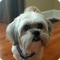 Adopt A Pet :: Clancy - Alpharetta, GA