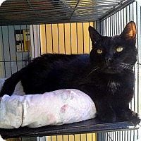 Adopt A Pet :: Midnight - Augusta, GA
